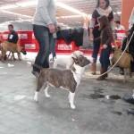 Feria Canina Zaragoza 2015
