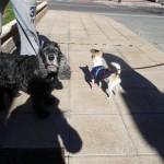 Lolo conoce a sus nuevos amigos