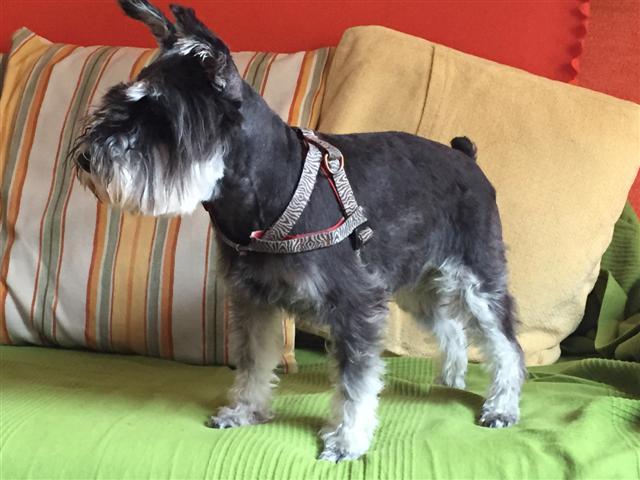 Peluquería Canina Naidra