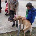 Educación canina mucho donde aprender