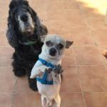 Lolo y Conrado